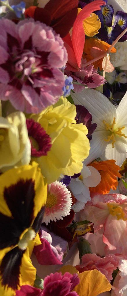 druhy jedlých kvetov