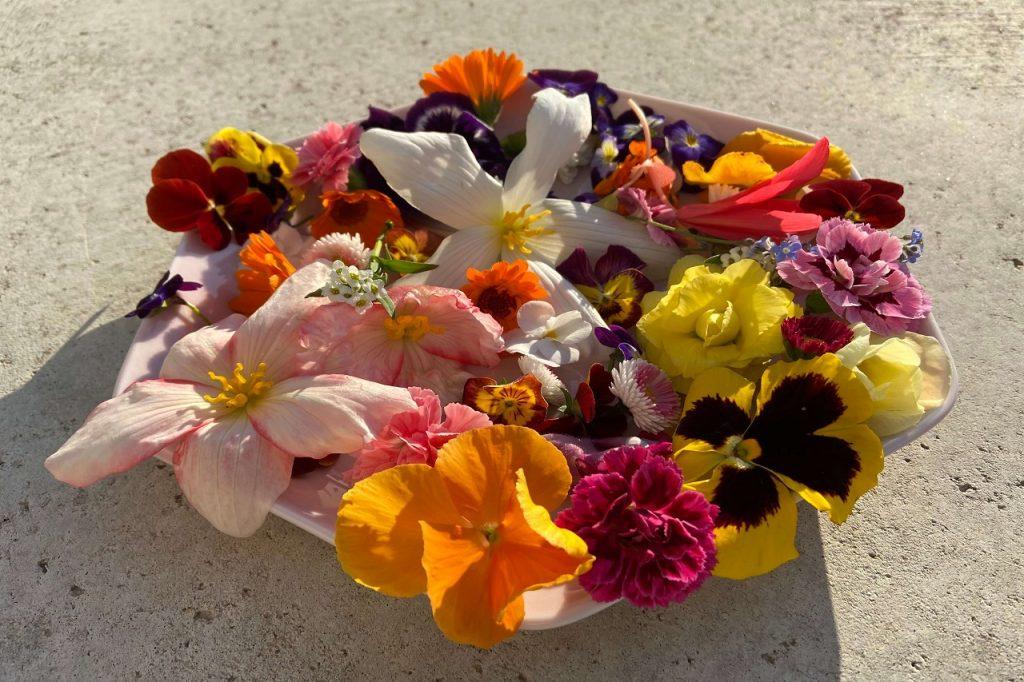 jedlé kvety použiť